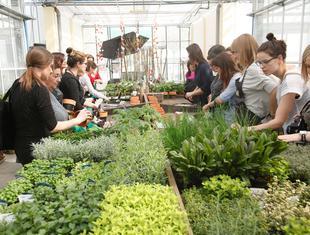 Miejskie ogrodnictwo - od czego zacząć?